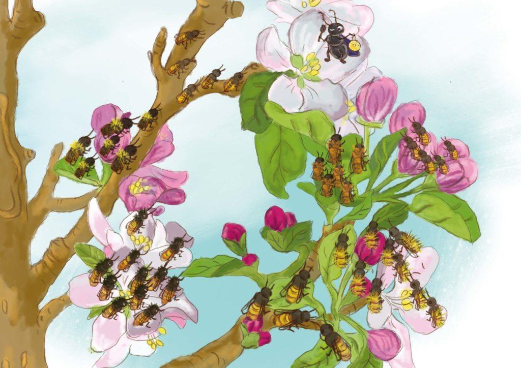 pszczoły siedzą na jabłoni i słuchają swojej przewodniczącej